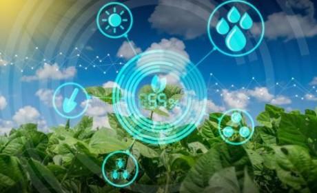 """广东将建数字农业试验区 打造""""数字农业硅谷"""""""